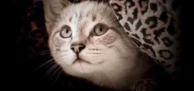 accueillir un chaton
