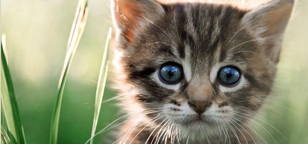 conseil adoption chat