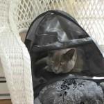 Chat dans cachette
