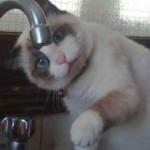 chat boit robinet