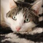 chat calme sur tapis