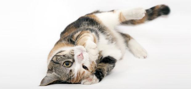 avoir et choisir un chat