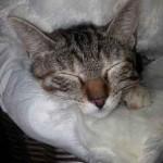 Chat dormeur trop mignon