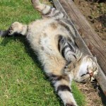 photo chat europeen dort gazon
