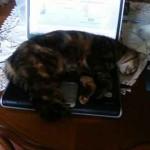 Photo chat dort sur PC