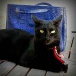 Chat noir avec collier rouge