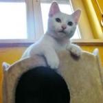 Chat blanc perché sur arbre a chat