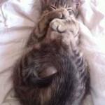 Image chaton qui dort