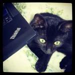Chaton noir en photo