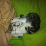 Photo chaton dort sur couverture