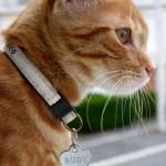 Image petite chatte rousse avec collier mignon