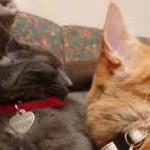 Deux chat qui dorment ensemble