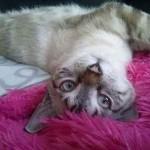 photo joli chat à l'envers
