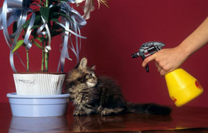 Réprimander son chat