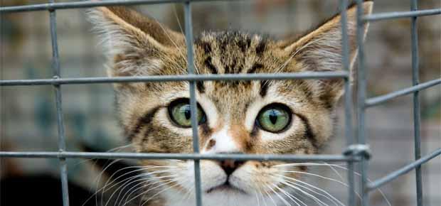 ou adopter chat ou un chaton