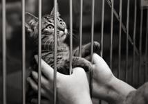 ou adopter un chat
