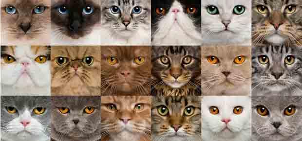 chat de race