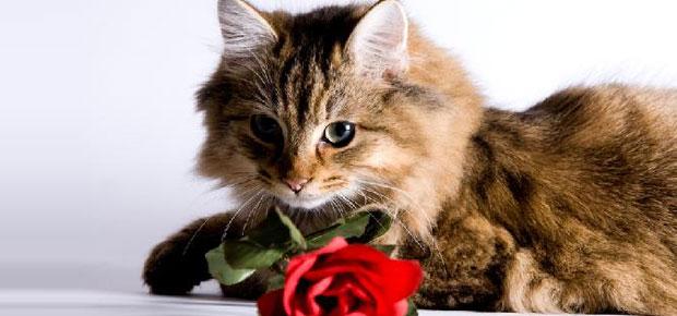 st valentin chat