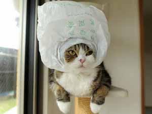 Photos de maru - Photo de chat rigolo ...
