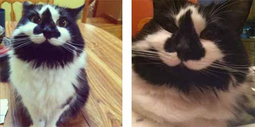 Chats rigolos et les plus insolites du monde - Photo de chaton rigolo ...
