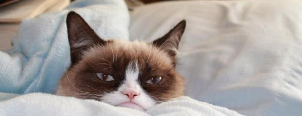 chat grumpy cat tard
