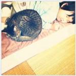 chat qui dort avec enfant