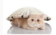Le chat est malheureux en appartement.