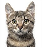 Je suis allergique aux poils de chats.