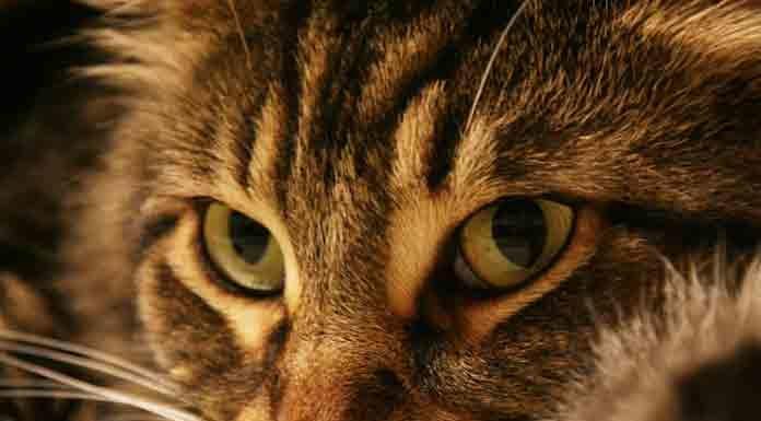 idees recues sur les chats
