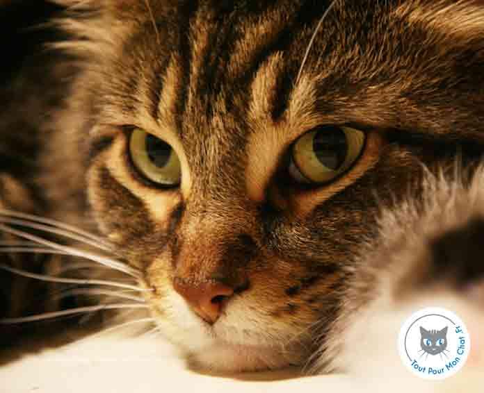 Id es re ues sur le chat tout pour mon chat - Mon chat me colle plus que d habitude ...