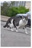 danger chat gros