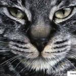 peinture chat noir et blanc