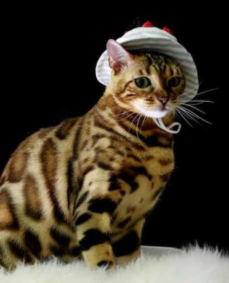 Deguisement chat pour déguiser son chat