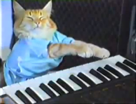 keyboard cat chat