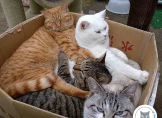 chat dans carton