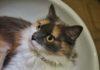chat-dans-un-lavabo