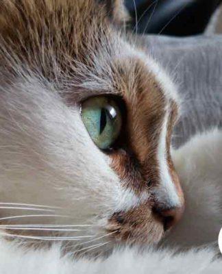 pouquoi aimer ou ne pas aimer les chats