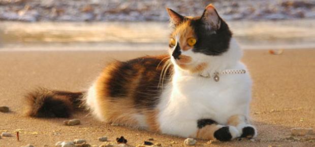 voyage chat etranger