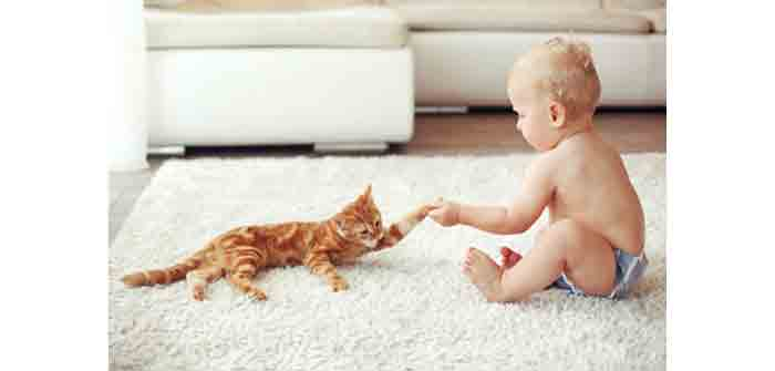bebe arrive maison chat