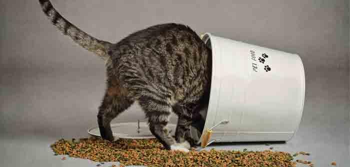 est ce que mon chat est obèse
