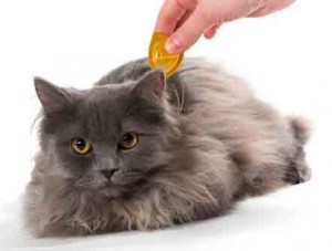 chat pipette anti puce