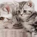 eduquer chaton