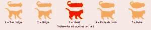 savoir-si-mon-chat-est-trop-gros