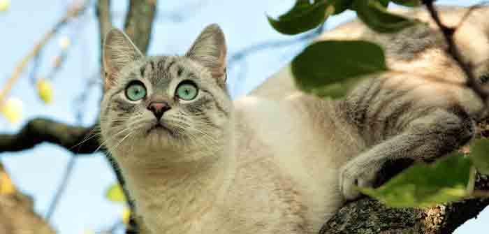 chat-qui-chasse-souri-oiseau
