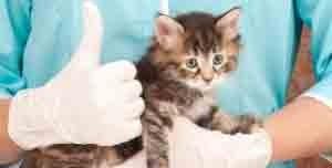 soigner coryza chat vaccin