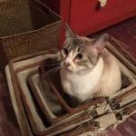 beau chat en boite
