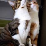 belle photo de chat