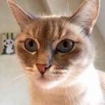 chat de maison