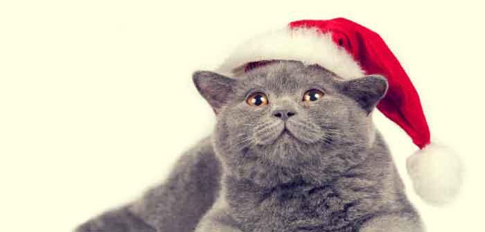 faire plaisir a un chat heureux a noel