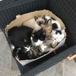 chatte avec chaton